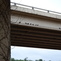 Under the Mopac Bridge