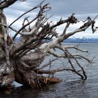 Yellowstone Do-Over Part 5: Deadfall