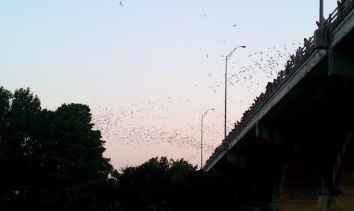 bats 5