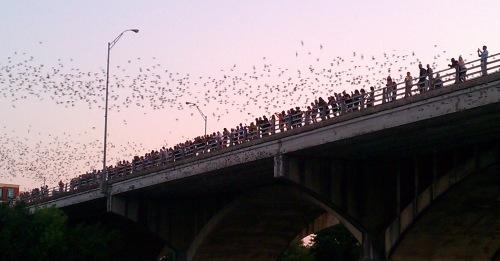 bats 9