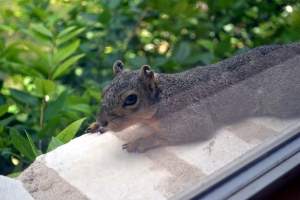 squirrel on windowsill 3