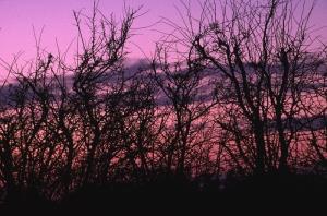 image: hillerscapes.co.uk