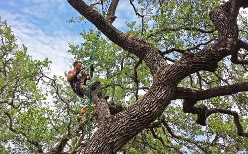 men in trees 2